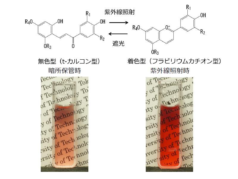 天然色素のみを用いた「フォトクロミック材料」の開発に成功、化粧品や食品などへの応用も可能に