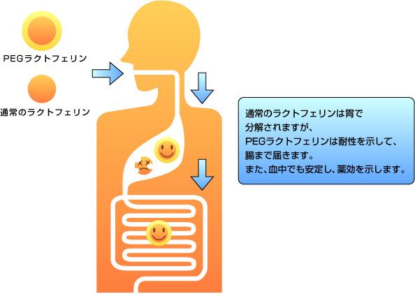ポリエチレングリコール peg 修飾ラクトフェリンの開発と創薬への展開