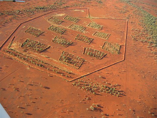 オーストラリア内陸の沙漠で樹木を育てるには?爆薬を使った土壌改良と数年に一回の洪水の水を集めるバンク(土手)を作って植林を試みる。